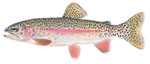 LIMITED EDITION PRINT MC CLOUD RIVER RAINBOW TROUT