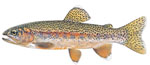 LIMITED EDITION PRINT KERN RIVER RAINBOW TROUT